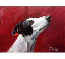 Greyhound study Photographic Print