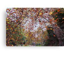 Autumn at Waterfall Gully Canvas Print