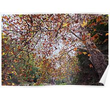 Autumn at Waterfall Gully Poster