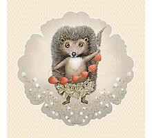 Animal Hedgehog Strawberry Photographic Print