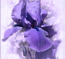 Purple Iris #2 by Elaine Teague