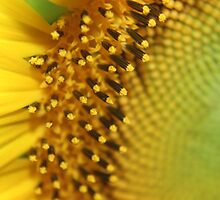 Pollen spikes by Teacup