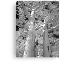 Looking up - Infrared Canvas Print