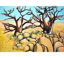 Tree Love Photographic Print