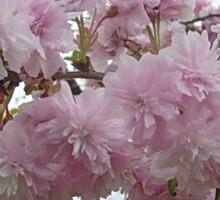 Spring in pink Sticker