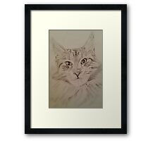 Cat Maine Coon Framed Print