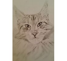Cat Maine Coon Photographic Print