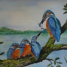 THE KINGFISHERS AGAIN by Marilyn Grimble
