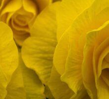 Begonia Shocking Yellow Sticker