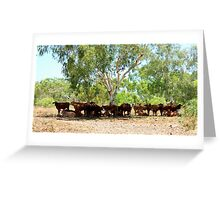 Shady Cows - Pilbara, Western Australia Greeting Card