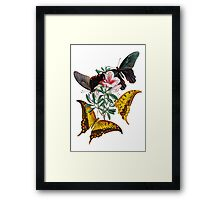 FF - Butterfly-3 Framed Print