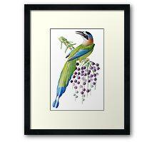 TIR-Brazil-Bird-6 Framed Print