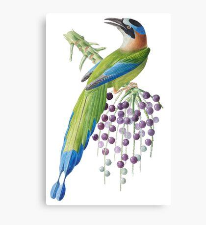 TIR-Brazil-Bird-6 Canvas Print