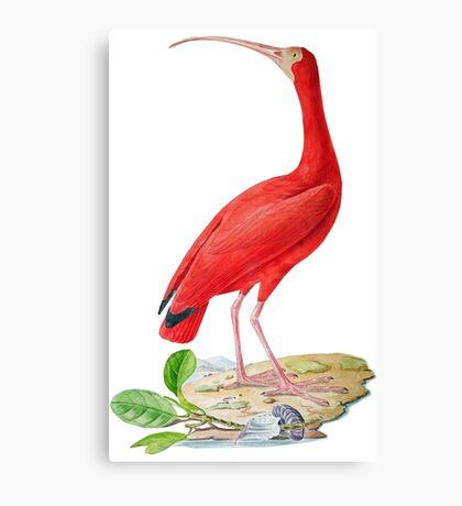 TIR-Brazil-Bird-5 Canvas Print