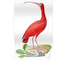 TIR-Brazil-Bird-5 Poster