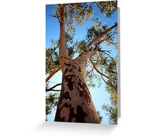 Tree With a View - Millstream Homestead Greeting Card