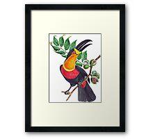 TIR-Brazil-Bird-4 Framed Print