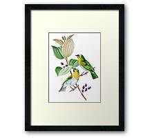 TIR-Brazil-Bird-2 Framed Print