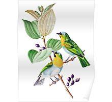 TIR-Brazil-Bird-2 Poster