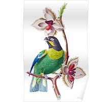 TIR-Brazil-Bird Poster