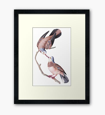 TIR-Brazil-Bird-3 Framed Print
