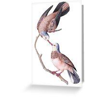 TIR-Brazil-Bird-3 Greeting Card