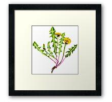 Dandelion flower. Framed Print