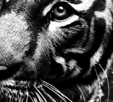 A Tiger's Potrait Sticker