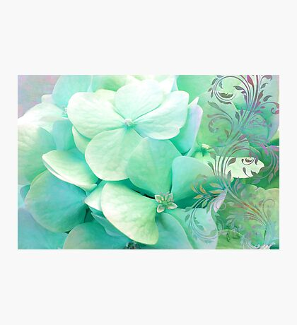 Mint Cream Hydrangea flowers, mint, aqua, lavender floral art Photographic Print