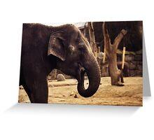elephant, asia elephant Greeting Card