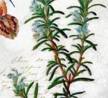Shabby Chic Rosemary herb Hummingbird Botanical illustration art Sticker