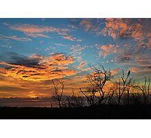 Lorikeet Sunrise Photographic Print