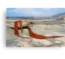 Seaweed Drape - Great Ocean Road Metal Print
