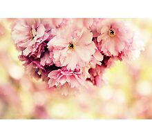 Soft Cherry Blossom Photographic Print