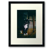 Jasper White Toes Framed Print