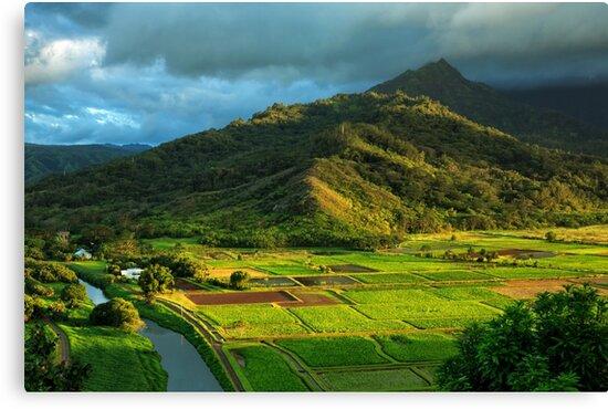 Hanalei Valley Taro Fields by James Eddy