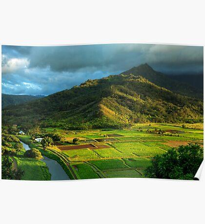 Hanalei Valley Taro Fields Poster