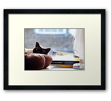 Cat chilling  Framed Print