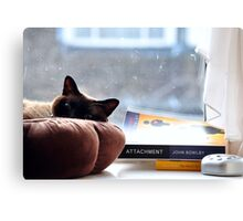 Cat chilling  Canvas Print