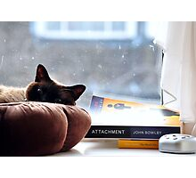 Cat chilling  Photographic Print