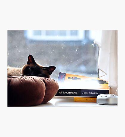 Cat chilling  Photographic Print