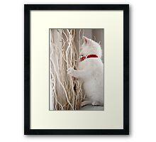Kitten (Odin) with Twigs  Framed Print