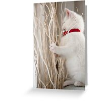 Kitten (Odin) with Twigs  Greeting Card