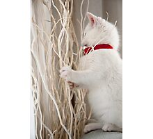 Kitten (Odin) with Twigs  Photographic Print