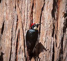 Woody woodpecker by Lynn Starner