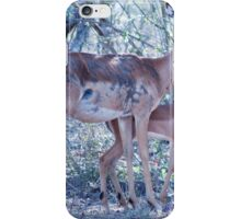 Kudu with foal iPhone Case/Skin