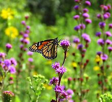 The Butterfly Garden by lorilee