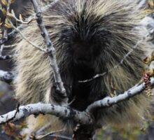North American Porcupine Sticker
