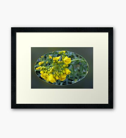 Tiny yellow flowers Framed Print