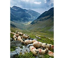 Sheep on the mountain Photographic Print